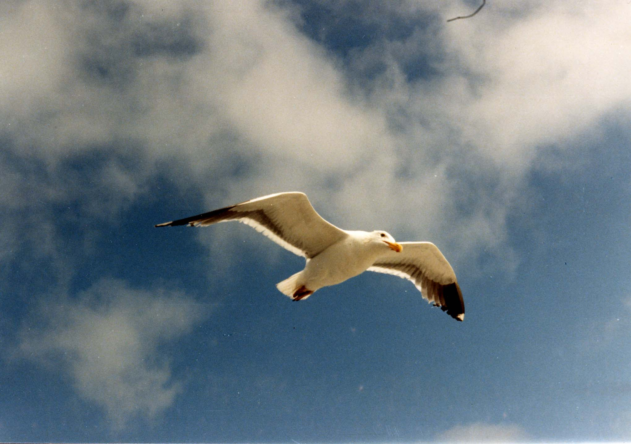 http://h3.homestead.com/Jonathan_Livingston_Seagull_taken_by_Mom_for_Dad.jpg